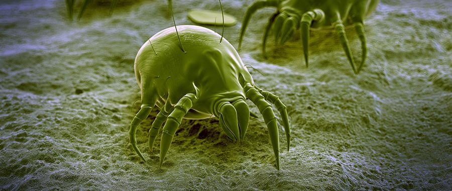 How To Kill Dust Mites 3 Iaq Products That Prevent Fall
